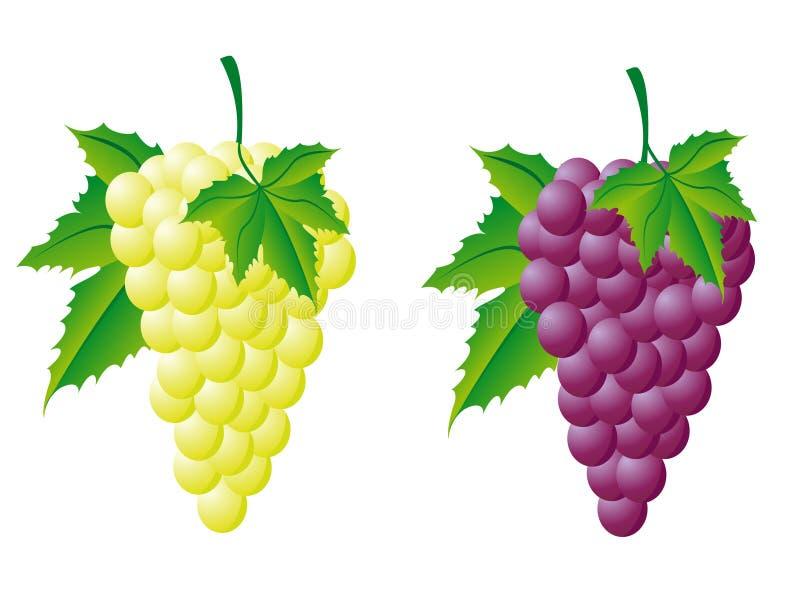 röd white för druvor royaltyfri illustrationer