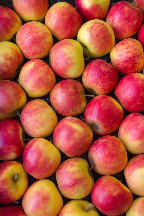 Röda äpplen. arkivfoto