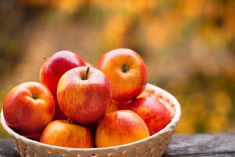 Röda äpplen i bunken royaltyfri foto
