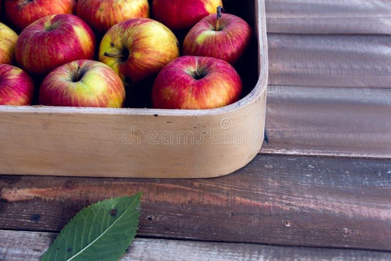 Röda äpplen i en ask på en träbakgrund royaltyfri bild