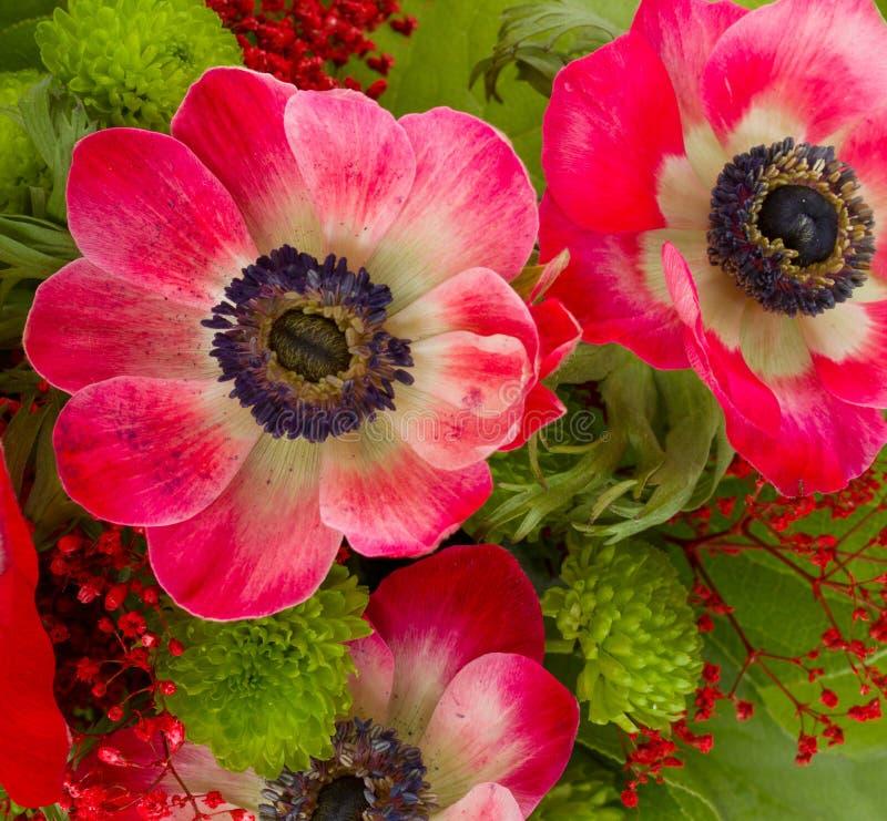 röda anemonblommor royaltyfri fotografi