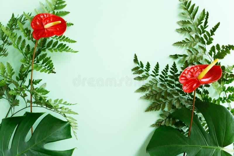 Röda Anthuriumblommor, ormbunke och monsterasidor på grön bakgrund Sommarmodell royaltyfria foton
