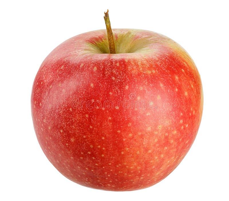 Röda Apple för den sunda livsstildesignen som isoleras på vit bakgrund modern design Ny frukt royaltyfri foto