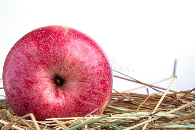 Röda Apple med hö på en vit bakgrund arkivfoton
