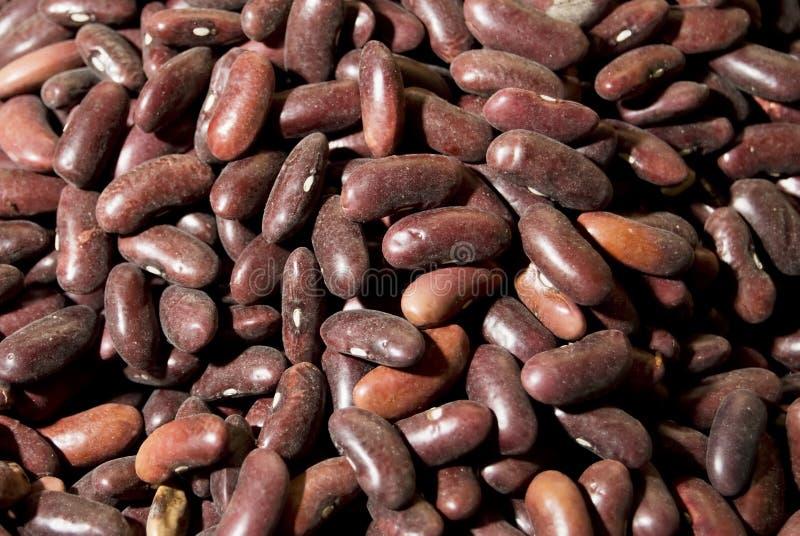 röda bönor arkivfoton