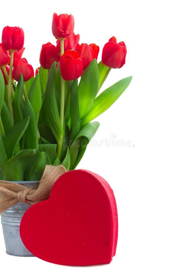 Röda blommas ro arkivfoton