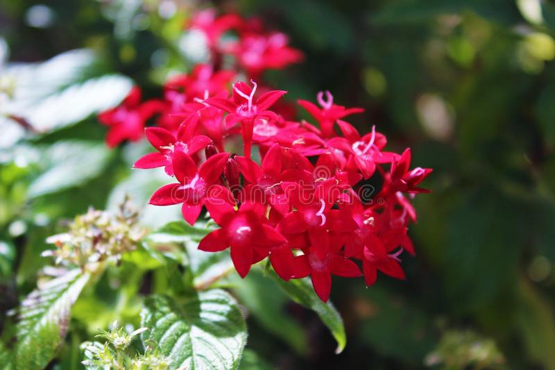 2 röda blommor royaltyfri foto