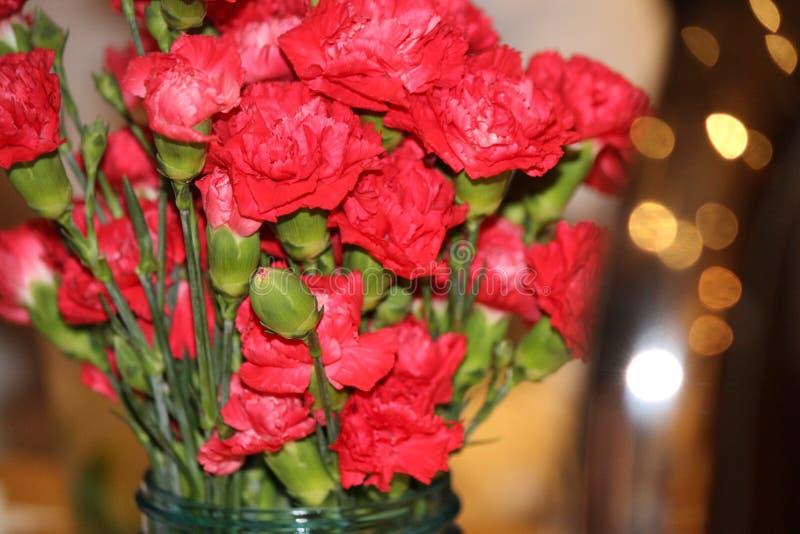 Röda blommor in royaltyfria foton