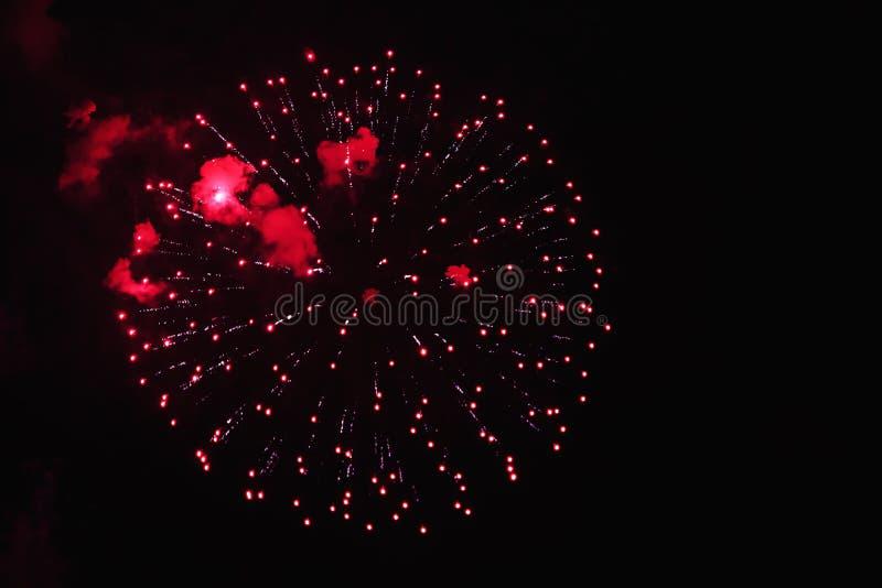 Röda blommor för härliga fyrverkerier på natthimlen Ljust firew royaltyfri foto
