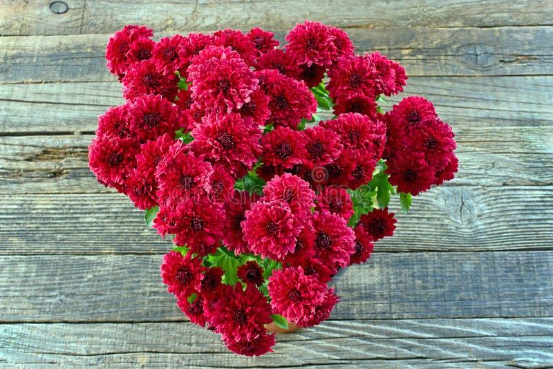 Röda blommor för krysantemum på träbakgrund arkivbilder
