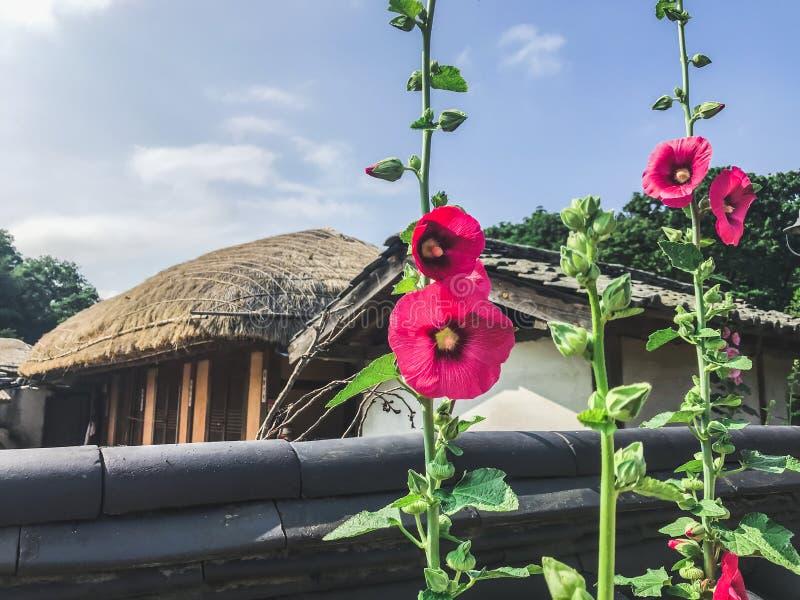 Röda blommor i den traditionella koreanska byn 30 ändrande för korea för guardsjuli konung söder pal s seoul royaltyfri bild