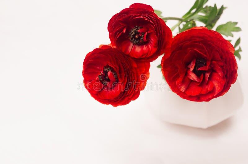 Röda blommor i keramikvascloseup på det vita wood brädet Blom- bakgrund för vår med kopieringsutrymme arkivbilder