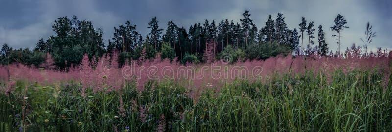 Röda blommor i regnväder arkivfoton