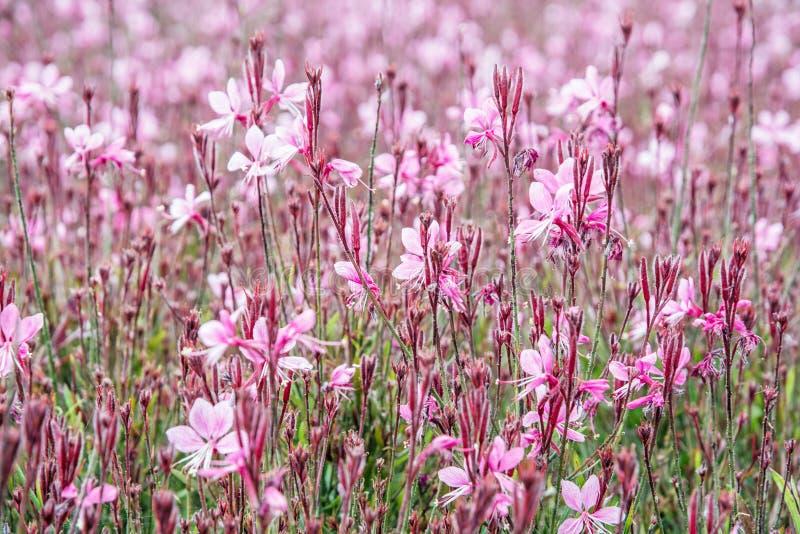 Röda blommor i sommaren parkerar royaltyfri fotografi