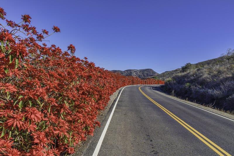 Röda blommor längs sidan av vägen fotografering för bildbyråer