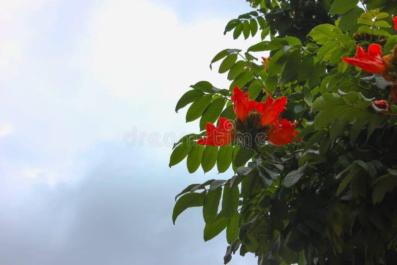 Röda blommor med himmelbakgrund arkivfoton