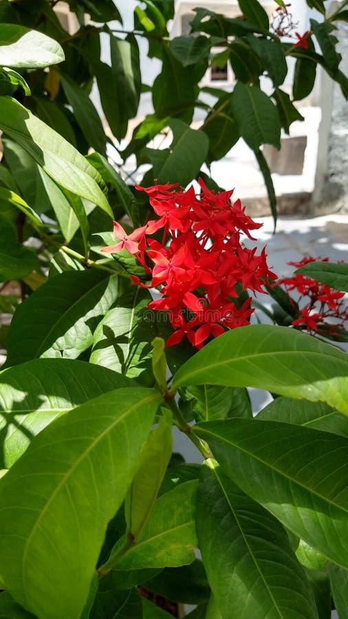 Röda blommor med naturliga gröna sidor arkivfoton