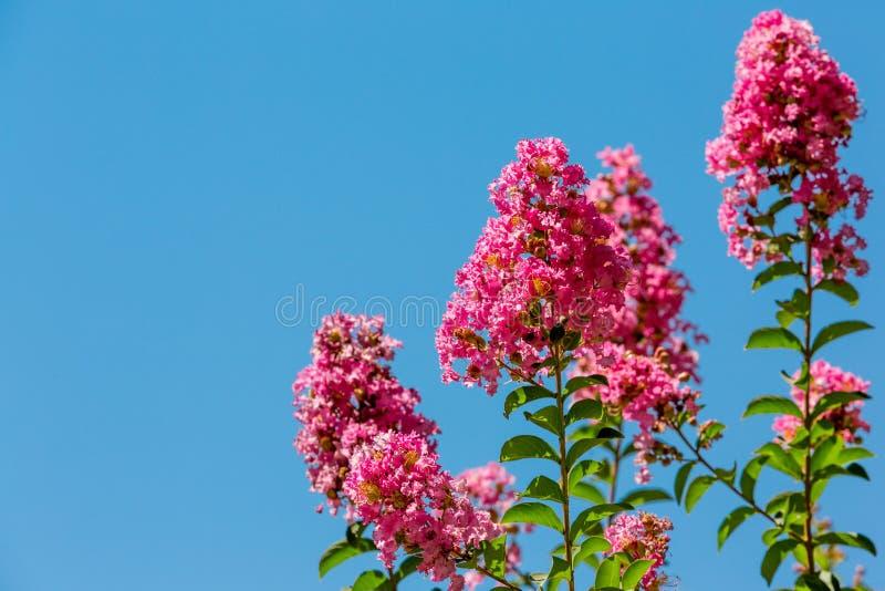 Röda blommor på en blå himmel royaltyfri fotografi