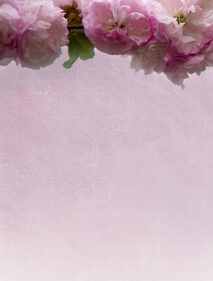 Röda blommor på rosa tekniskt papper arkivbilder