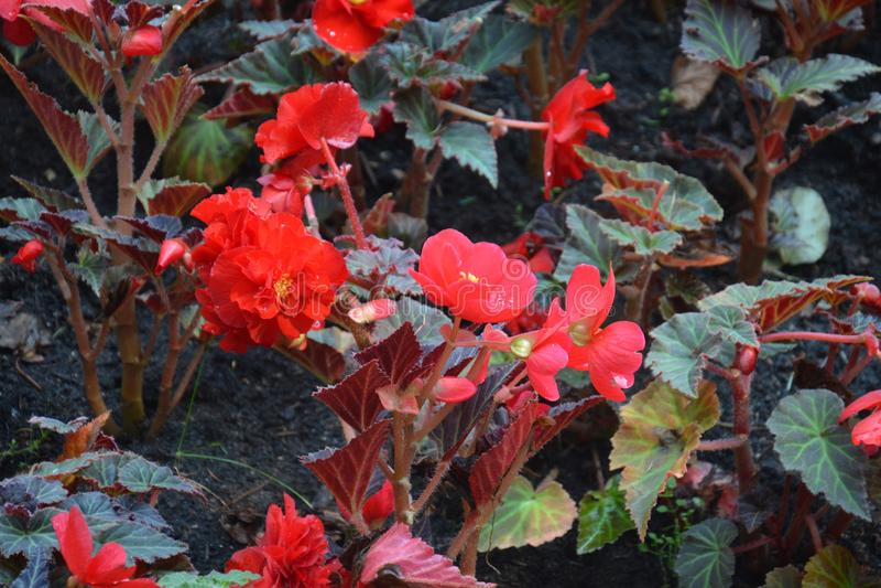 Röda blommor parkerar naturbladhöst arkivfoton