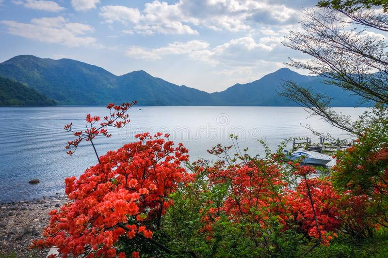 Röda blommor runt om Chuzenji sjön, Nikko, Japan arkivbilder