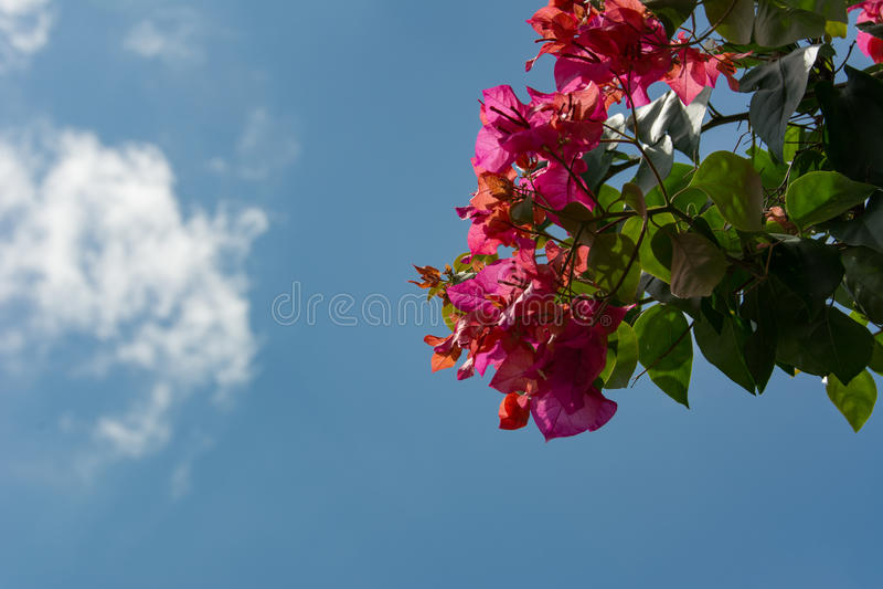 Röda blommor under blå himmel royaltyfri foto