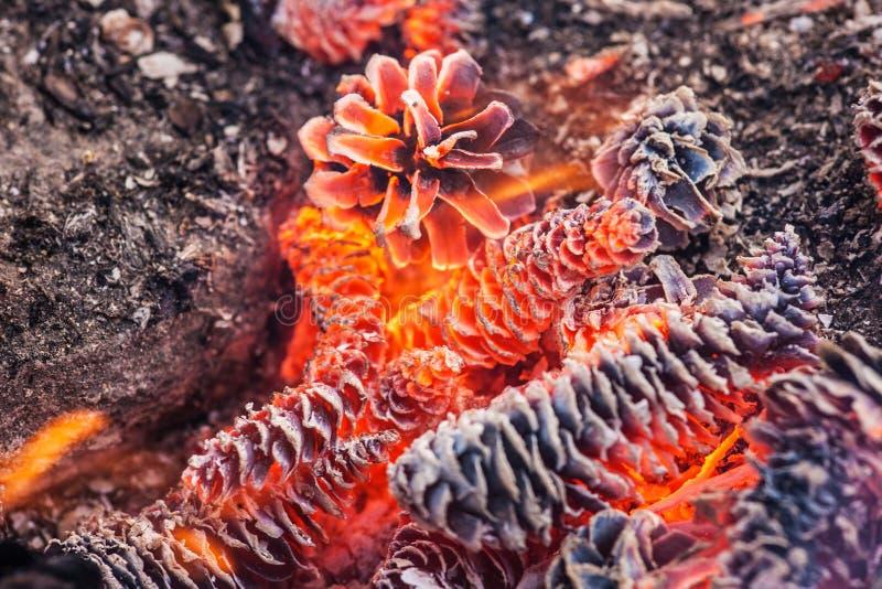 Röda brinnande kottar arkivfoto