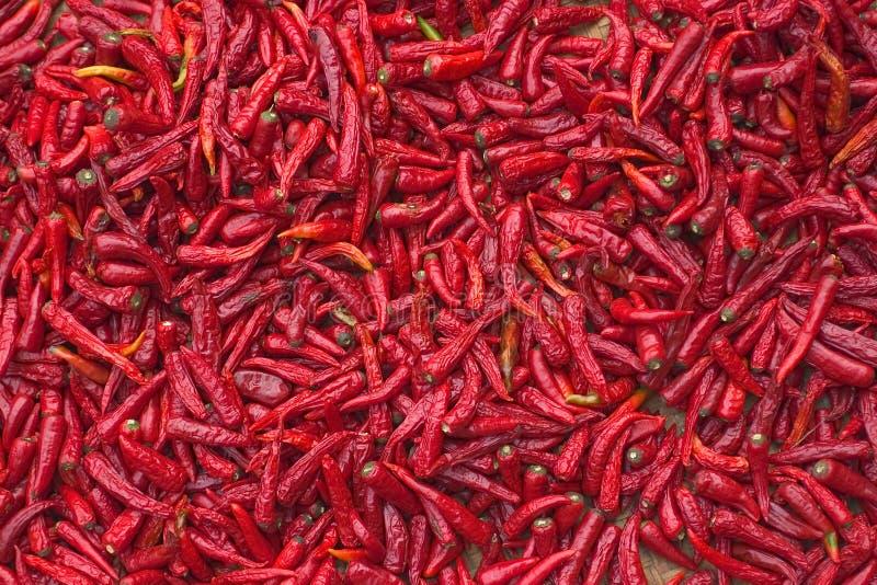 röda chilir arkivbilder