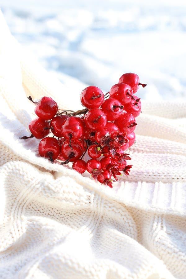 Röda crabapples royaltyfria bilder