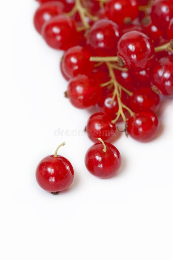 röda cranberries royaltyfria bilder