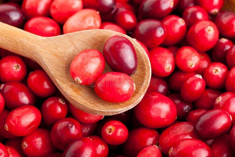 Röda cranberries arkivfoto