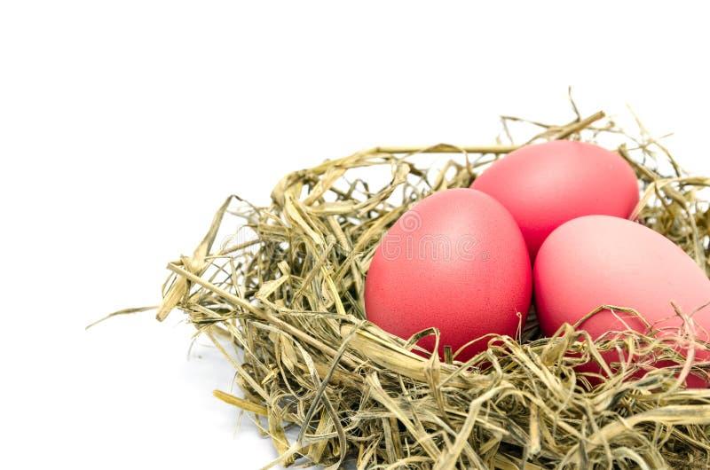 Röda easter ägg i ett isolerat rede royaltyfria foton