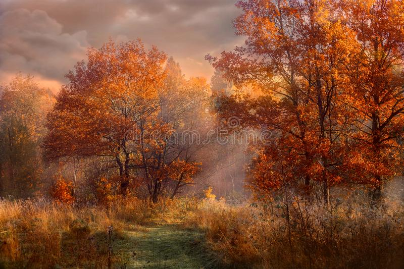 Röda ekar på den tidiga dimmiga morgonen royaltyfria foton