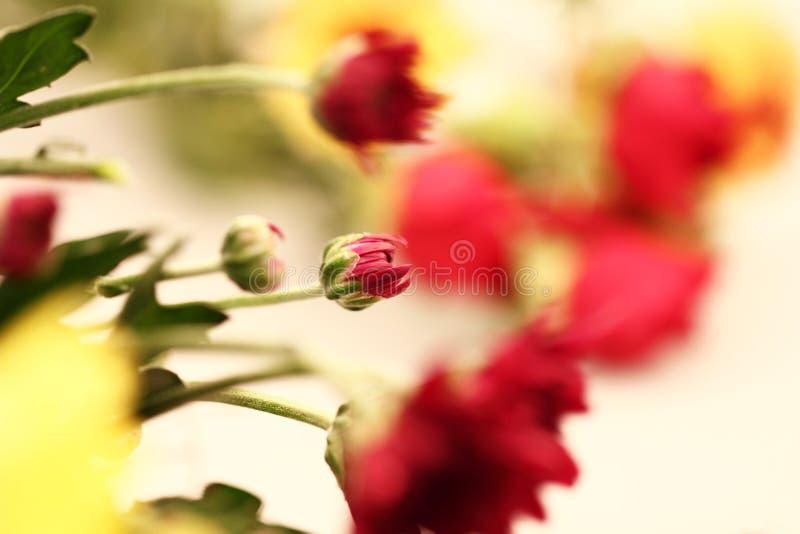Röda Flowe fotografering för bildbyråer