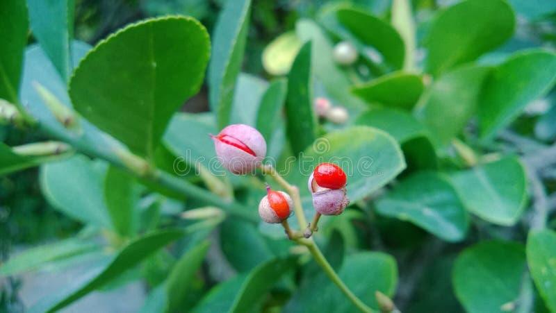 Röda frukter på en grön filial arkivbilder