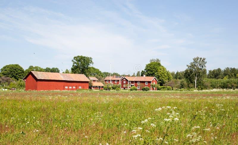 Röda hus med ett blommafält framme. fotografering för bildbyråer