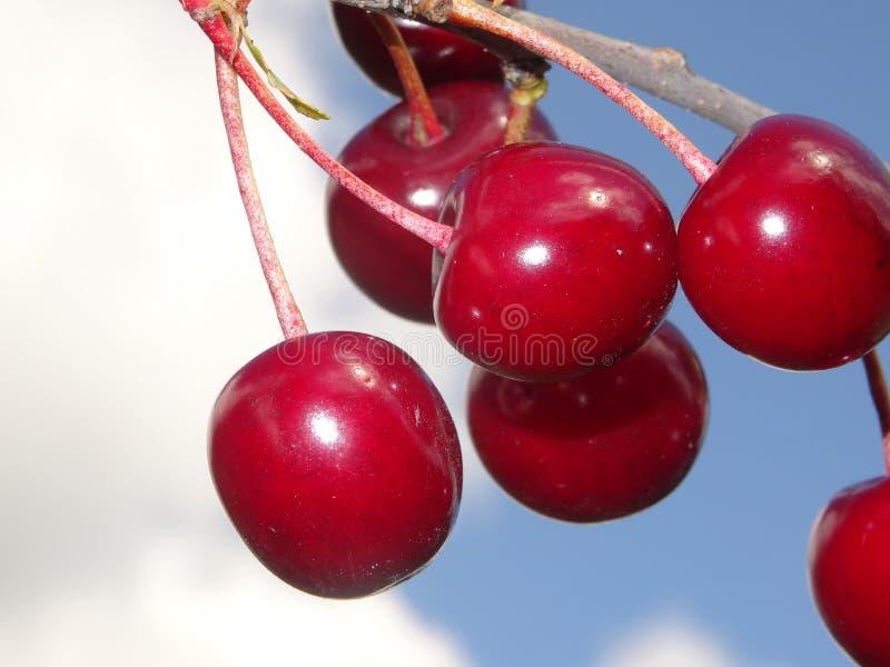 Röda körsbär arkivfoton