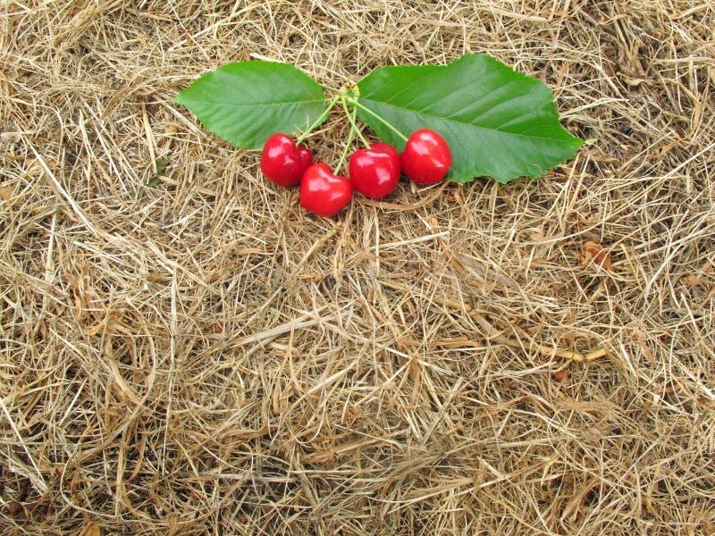 Röda körsbär har gröna sidor på brunt sugrörhö för bakgrund arkivfoton