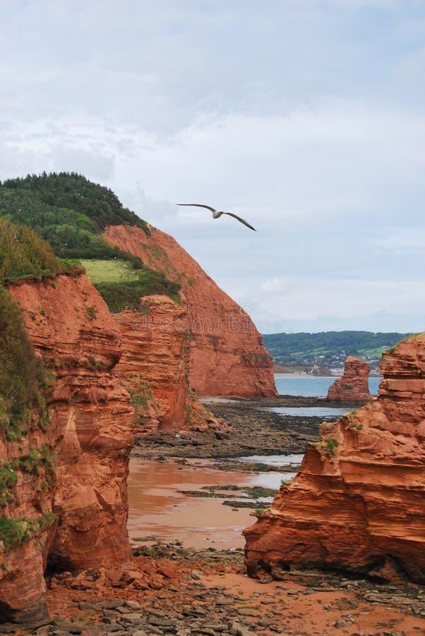 Röda klippor i Devon fotografering för bildbyråer