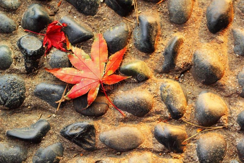 Röda lönnlöv på ett stengolv. royaltyfria foton