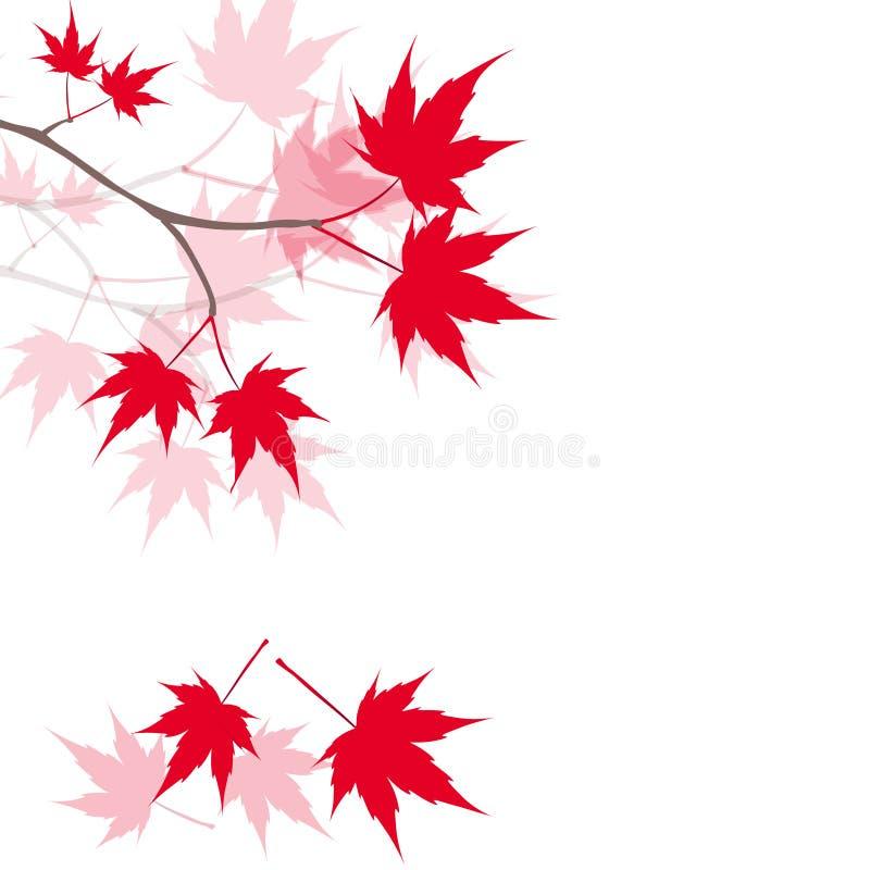Röda lönnlöv på filialerna japansk lönnred illustration stock illustrationer