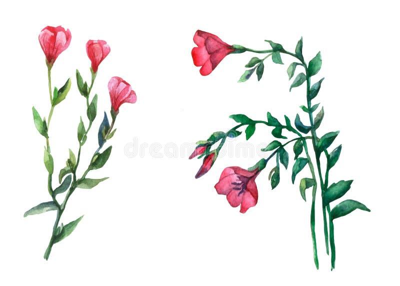 Röda Lein som blommar linvattenfärgillustrationen på vit bakgrund royaltyfri illustrationer