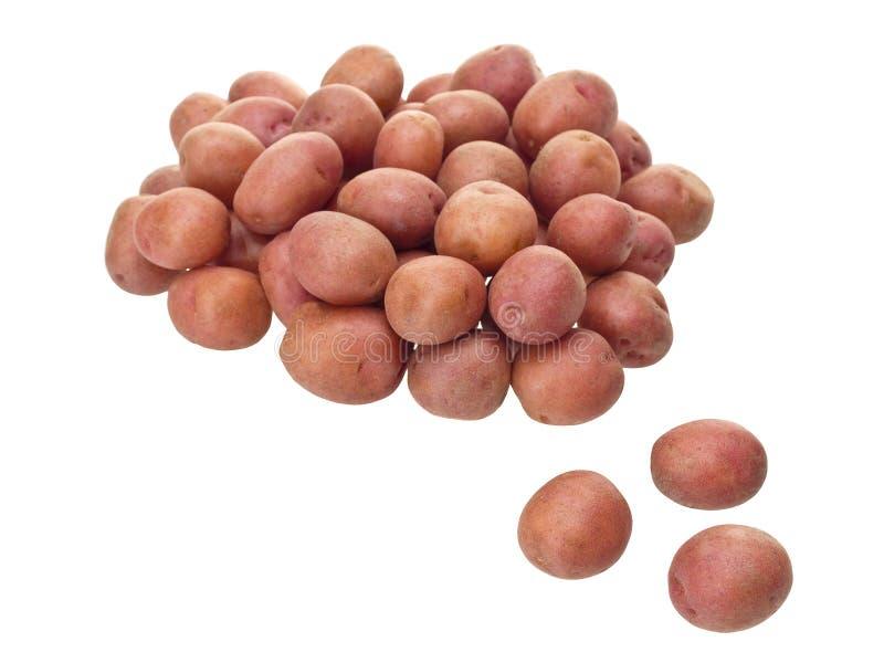 röda lilla potatisar arkivfoto