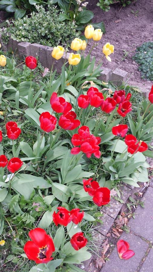 röda ljusa blommor royaltyfri fotografi