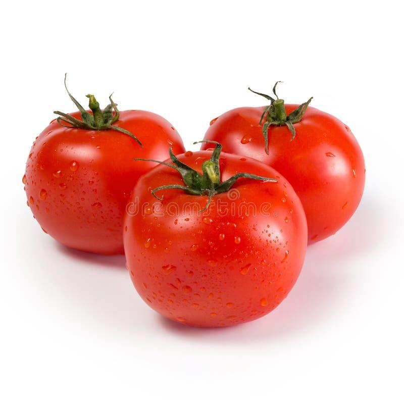 röda mogna tre tomater arkivfoton