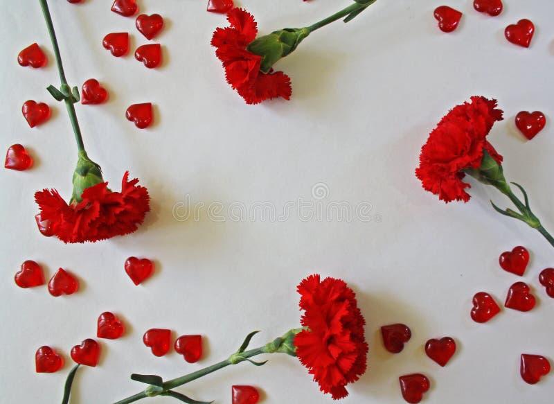 Röda nejlikor på en vit bakgrund royaltyfria foton