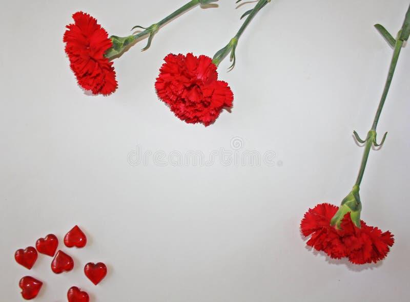 Röda nejlikor på en vit bakgrund arkivfoto