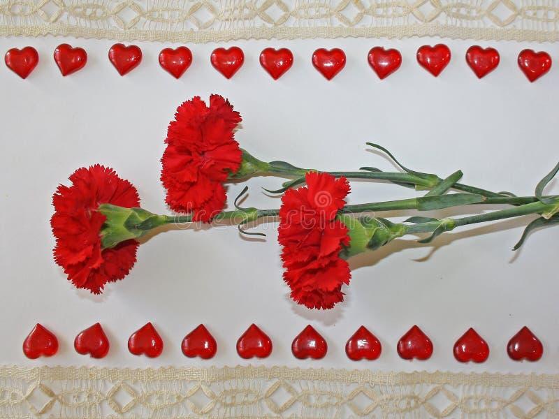 Röda nejlikor på en vit bakgrund arkivfoton