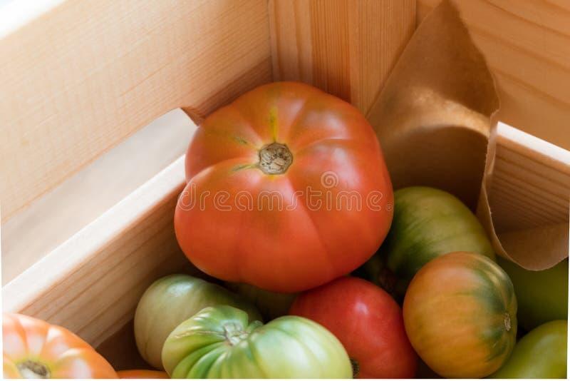 Röda och gröna tomater på en träbakgrund Tomatskörd royaltyfria bilder