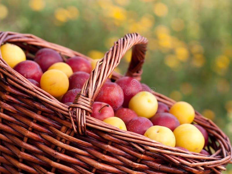 Röda och gula plommoner arkivbild